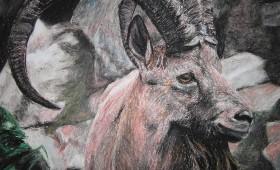 Krafttier Schaf (Mufflon)
