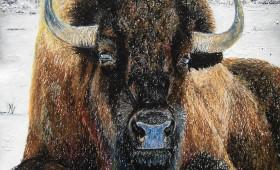 Krafttier Büffel/Bison