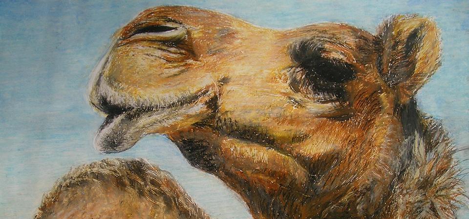 Krafttier Kamel